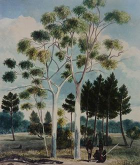 FCIC, Pine Forest, Adelaide, 1838 J. Skipper (courtesy AGSA)